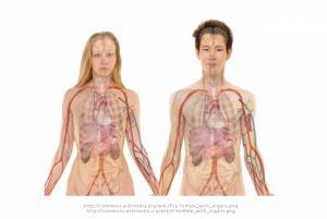 Jak funguje naše tělo